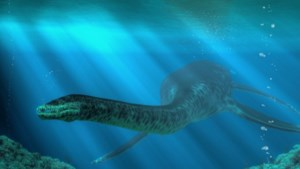 Wervel van 67 miljoen jaar oude dinosaurus gevonden in Sibbe