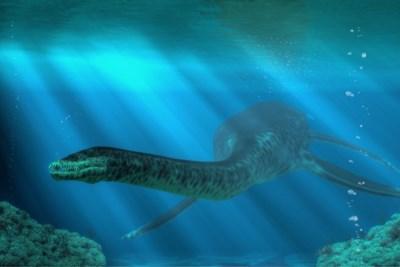Wervel van 67 miljoen jaar oude dinosaurus in Sibbe gevonden
