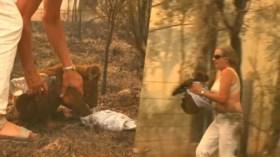 Video: Zwaar verbrande koala Lewis maakt het relatief goed dankzij reddende engel