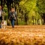 Weer een herfst zonder storm: 'Blaadjes nog aan de bomen'