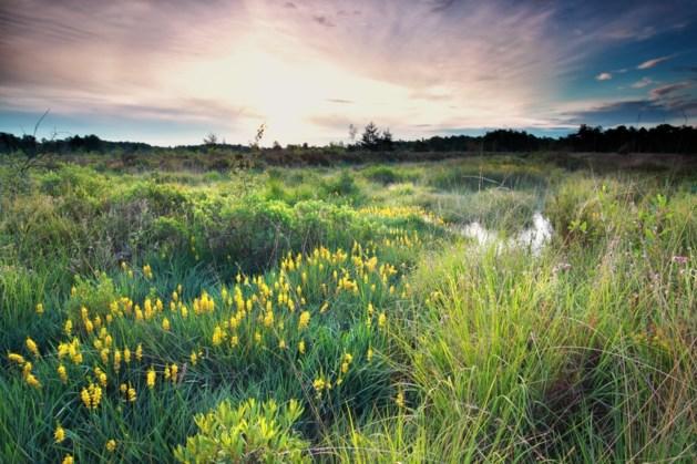 Mijn natuur blijft: Al 16.000 natuurfoto's gedeeld tegen kabinetsplannen
