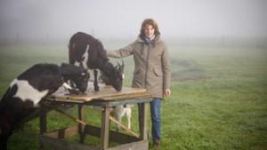 Toekomst van de veehouderij: 'Niet minder boeren, maar minder dieren'