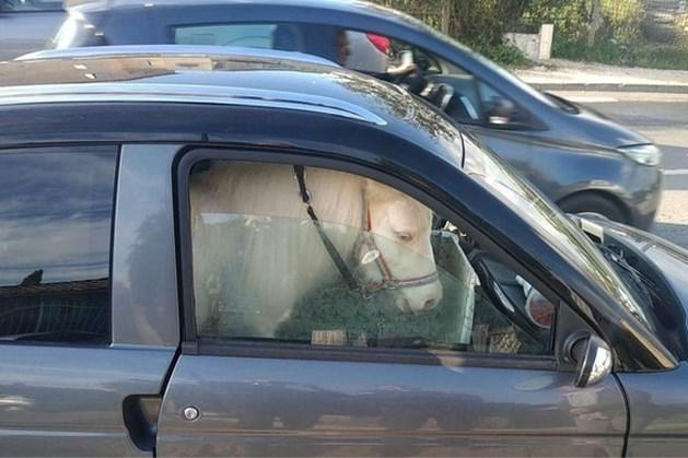 Vrouw rijdt rond in brommobiel met pony als passagier