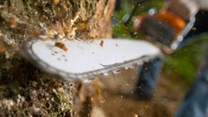 Kastanjebomen Maria Hoop ten prooi aan ziekte