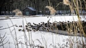 Schutterspark: voer eendjes geen brood