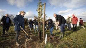 Grote kans op meer dan één miljoen bomen