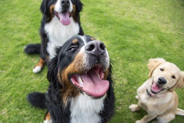 Lezing over hondengedrag bij Dierenkliniek Sittard