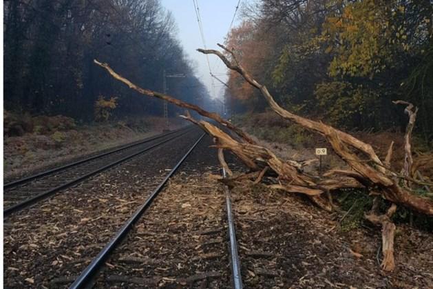 Geen treinen tussen Venlo en Kaldenkirchen door boom op spoor