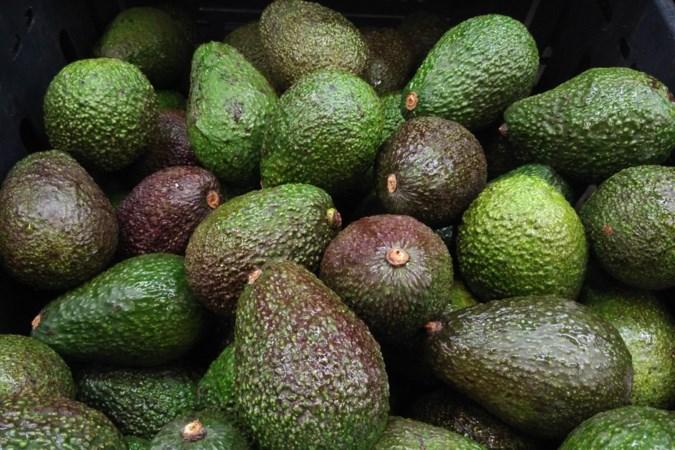 Waarom de ene avocado keihard is en de volgende bruine pulp
