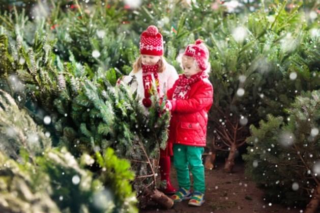 Helaas: een witte kerst blijft dit jaar iets om van te dromen
