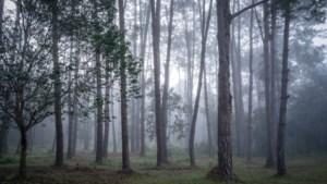 Politie rukt uit voor verdachte kist in bos