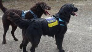 Vuurwerk gegooid naar hulphonden in Tilburg: 'Kan goed zijn dat ze nu voor altijd zijn verpest'