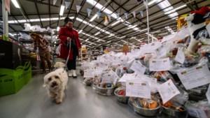Sinterklaas denkt in Beek ook aan de dieren