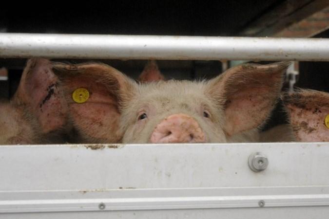 Rechter twijfelt of kernoverleg Eys wel belanghebbende is in kwestie rond varkensstal