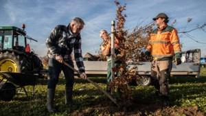 Dode bomen in Beeks levensbomenbos vervangen door nieuwe exemplaren