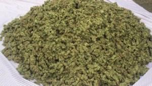 Politie vindt dertig kilo hennep in woning: twee aanhoudingen