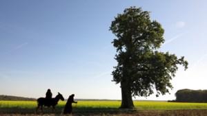 Expositie verbindt de vlucht van Josef, Maria en Jezus uit Egypte met het vluchtelingenprobleem