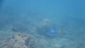 Wetenschappers slaan alarm op klimaattop: 'Zuurstof in zee neemt razendsnel af'