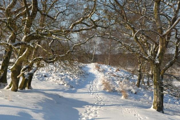 Verrassende winterwandeling in De Maasduinen