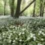Mogelijk meer stikstof in bronbossen tussen Elsloo en Bunde