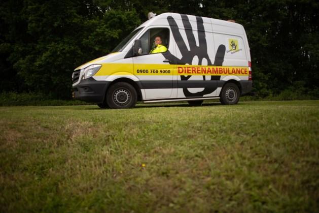 Chauffeurs dierenambulance op cursus bij Natuurhulpcentrum Opglabbeek