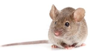 Muis in huis? Dit zijn de beste muizenvallen