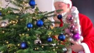 Kerstboom krioelt van insecten: 25.000 beestjes in één doorsnee boom