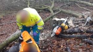 Man bij werk in bos Ingber gewond door omgewaaide boom