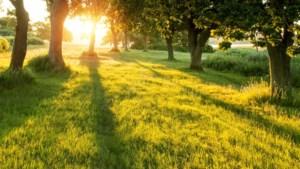 Planbureau over stikstofcrisis: niet minder, maar juist veel meer natuur nodig