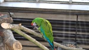 Papegaaienziekte duikt op in Nederland