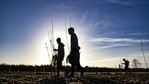 Leerlingen planten laatste gedeelte van nieuw stuk bos in Swalmen aan