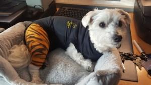 Hondje zwaar toegetakeld door Stafford, schadevergoeding voor getraumatiseerde eigenaar