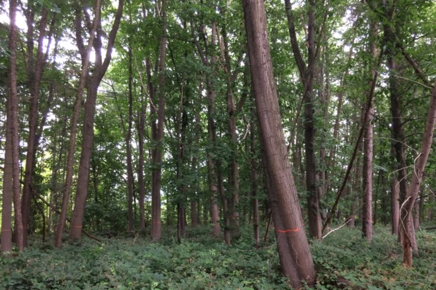 Nieuwe bomen moeten leven garanderen in Eyserbos