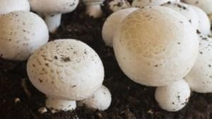 Nieuw paddenstoelencentrum Venlo richt zich op onderzoek, educatie en opleiding