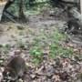 Wasberen van Kasteelpark Born krijgen gezelschap uit Stein en Schin op Geul
