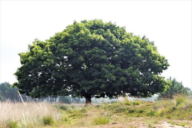 Lezing IVN over invloed klimaatverandering op bomen