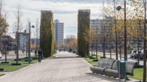 Buurtnetwerken Wittevrouwenveld en Wyckerpoort staan stil bij 100-jarig bestaan