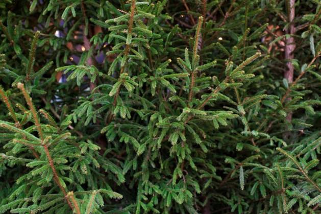 Jeugdwerk Ell spekt verenigingskas met inzameling kerstbomen