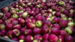 Supermarkt Budget Food komt aan Voltastraat Maastricht