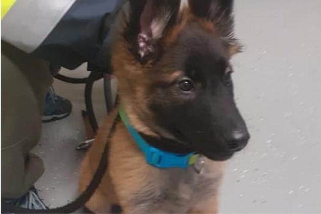 Man verzon verhaal over vastgebonden puppy langs A2 om van hond af te komen