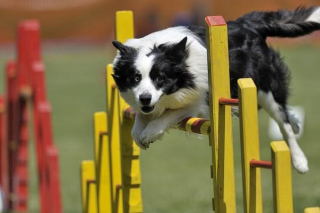 Zelfde regels voor hondenclubs Echt-Susteren