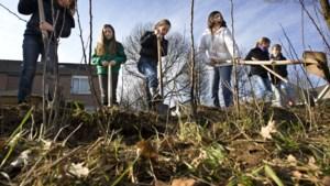 Global Exploiration plant honderd jonge boompjes in Valkenburg