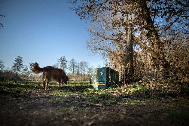 Projecten uit Amby, Susteren en Sittard dingen mee naar titel 'Beste buurtinitiatief van Limburg'