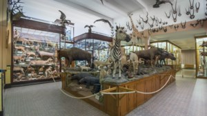 Missiemuseum Steyl trekt opnieuw meer bezoekers