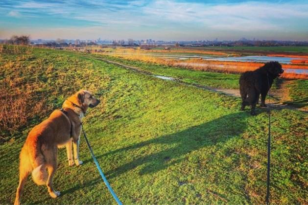 Strak blauw en een zonnetje: Nederland geniet van eerste 'lentedag' in januari