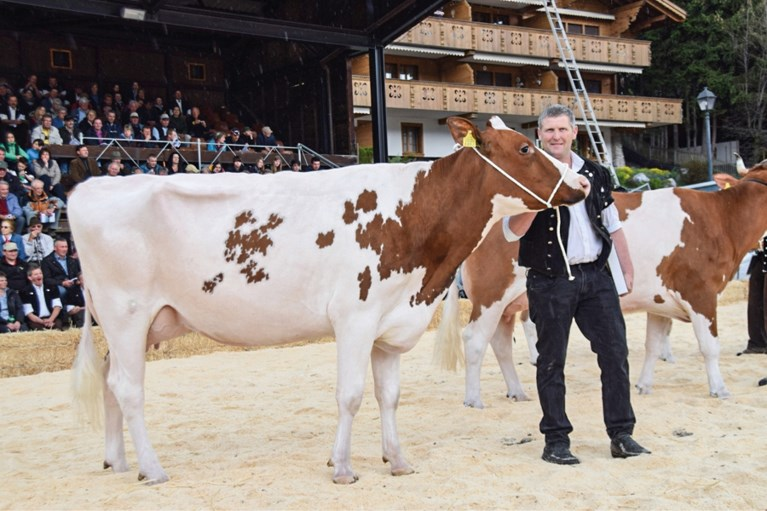 Maastrichtse Vivanne ging in de Zwitserse Alpen samenwonen met Reto en zijn dertig melkkoeien