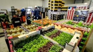 Landbouw scoort exportrecord, met dank aan bloembollen en varkensvlees