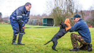 Speciale training voor honden die de politie gaan helpen