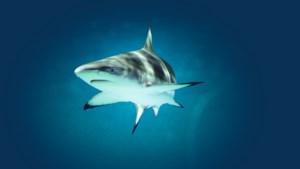 Zwemmen met haaien van je bucketlist strepen? Het kan gewoon in Nederland
