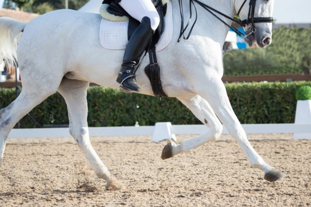 LK dressuur voor paarden bij jubilerende Paardenvriend